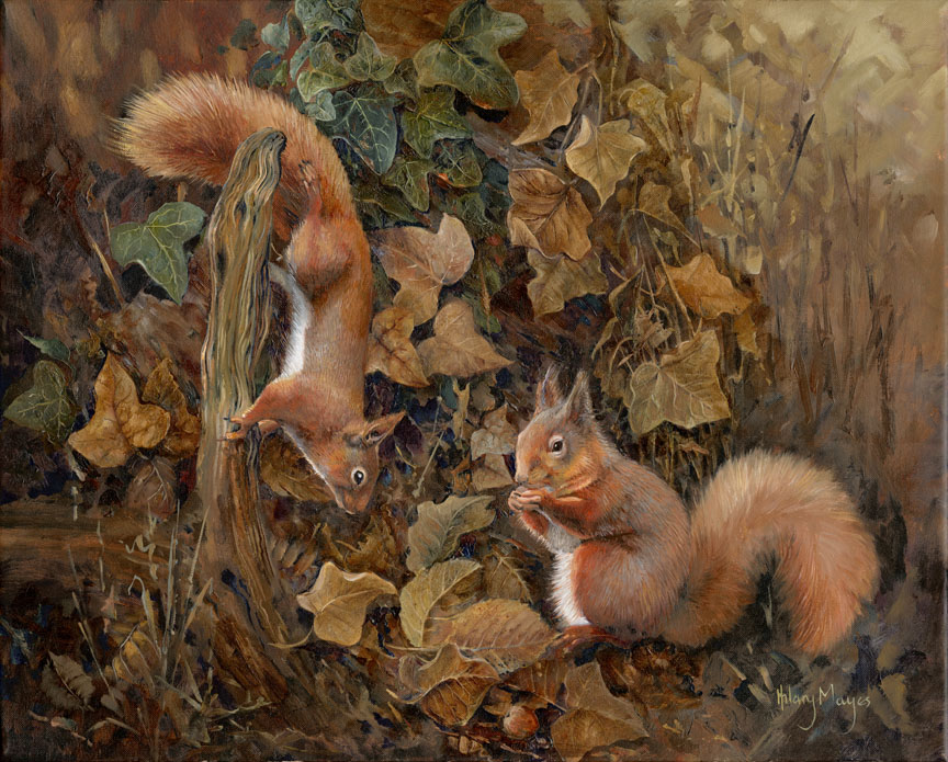 Wildlife – Squirrels by Hilary Mayes