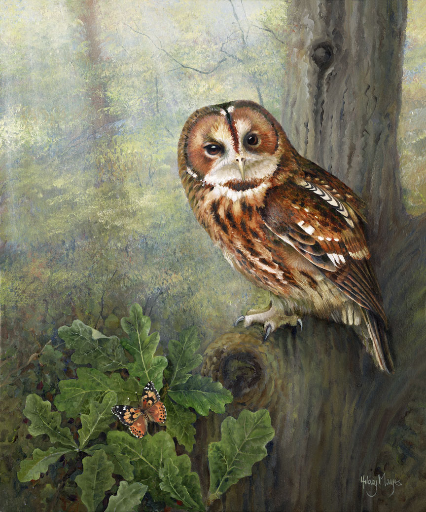 Wildlife – Tawny Owl in Tree by Hilary Mayes
