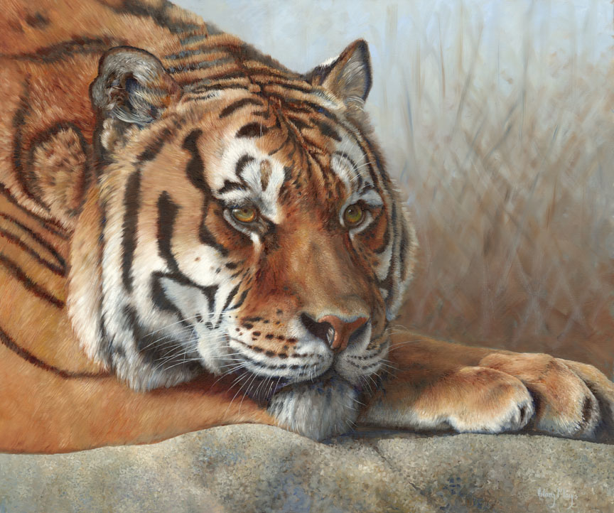 Wildlife – Tiger at Rest by Hilary Mayes