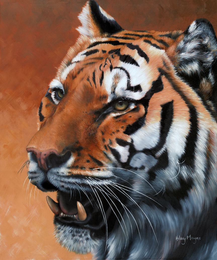Wildlife – Tiger by Hilary Mayes