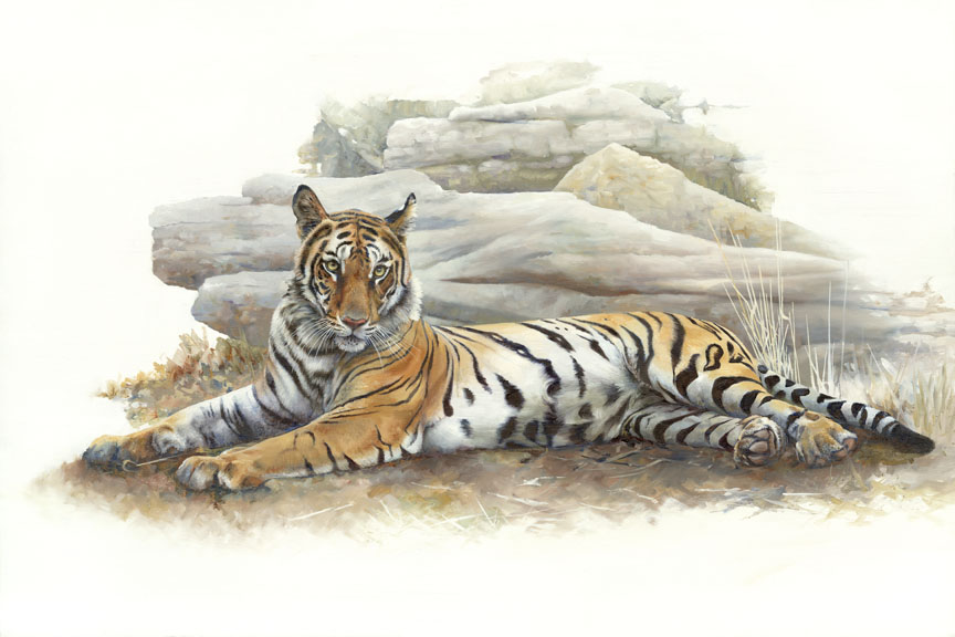 Wildlife – Tiger on White by Hilary Mayes