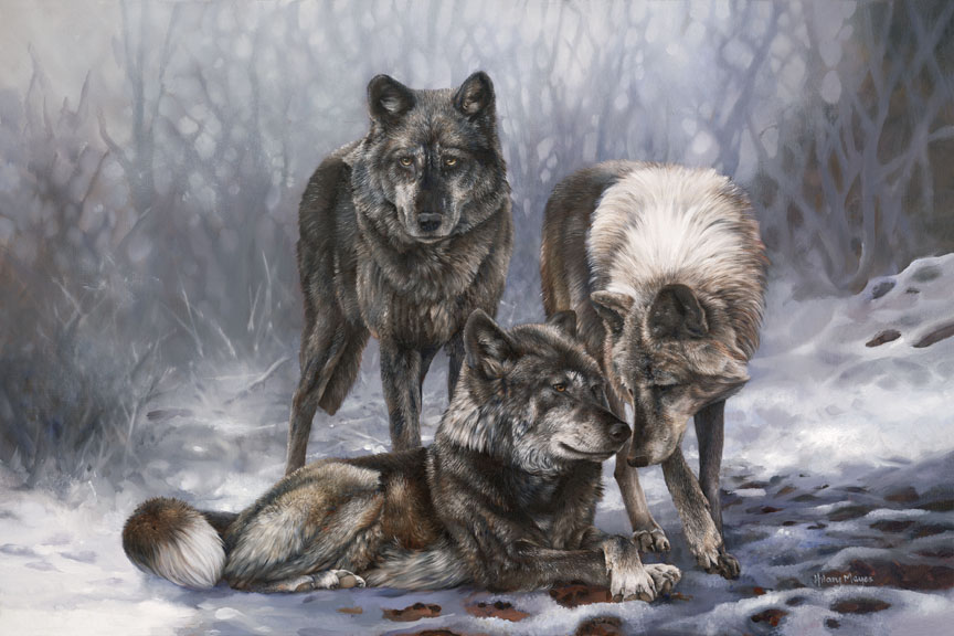 Wildlife – Wolve by Hilary Mayes