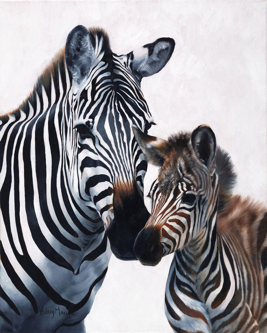 Wildlife – Zebra and Foal by Hilary Mayes