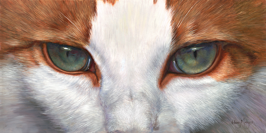 Pets – Cat Eyes by Hilary Mayes