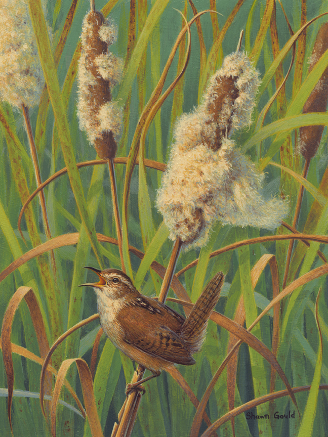 Marsh Song by Shawn Gould