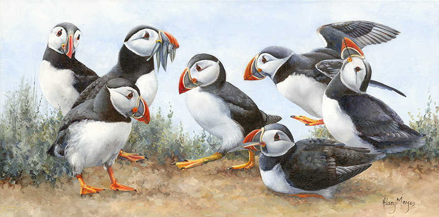 Wildlife – Puffins 2 by Hilary Mayes
