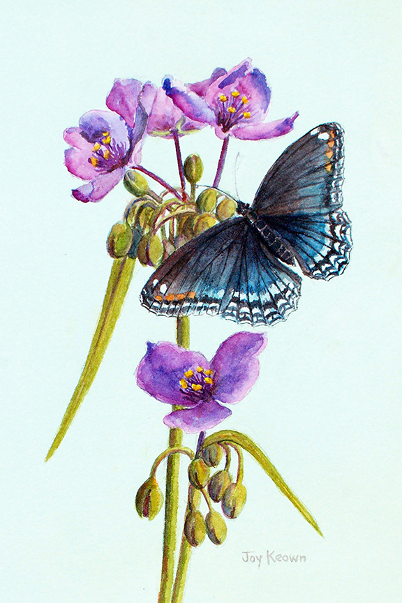 Red-spotted Purple by Joy Keown