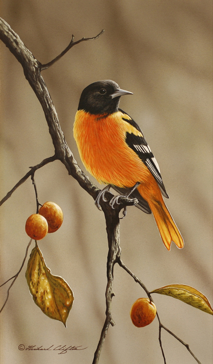 Oriole by Richard Clifton