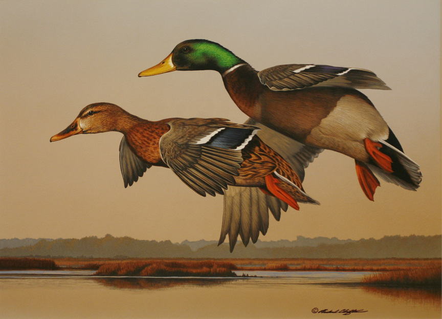Over the Marsh – Mallards by Richard Clifton