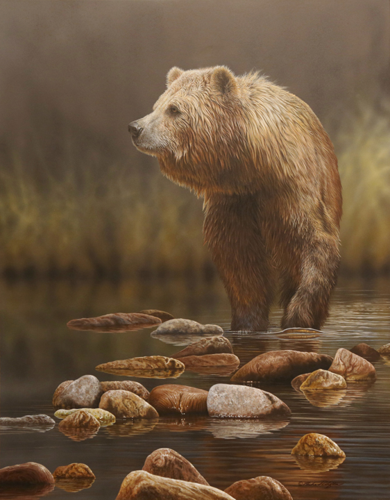 Quiet Stream – Grizzly Bear by Richard Clifton
