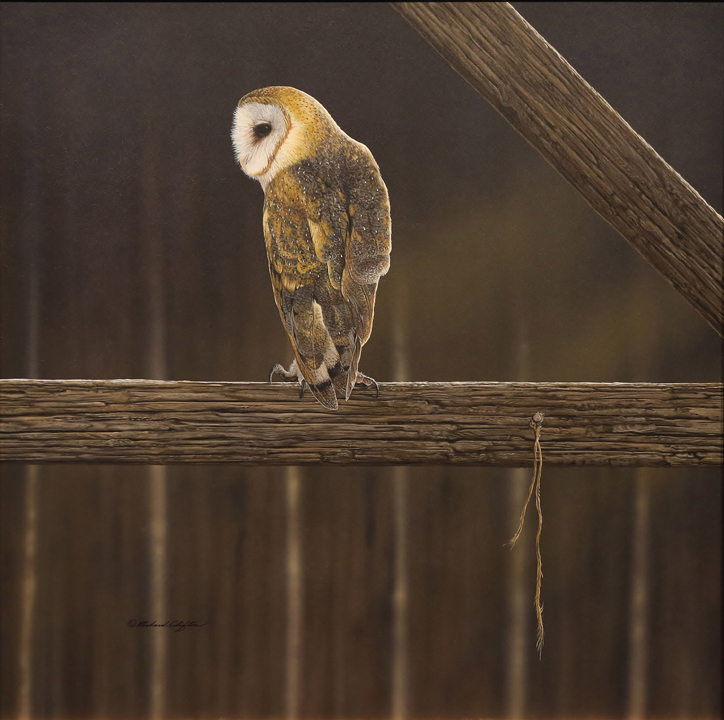 Rafters – Barn Owl by Richard Clifton