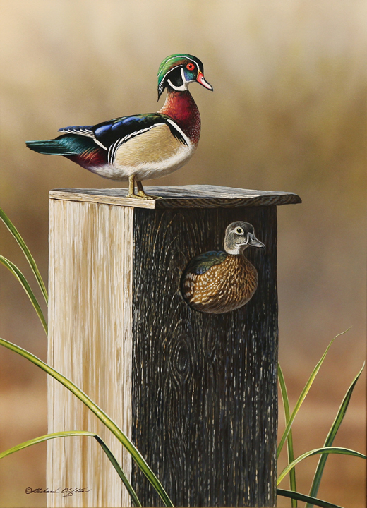 Summer Rental – Wood Ducks by Richard Clifton