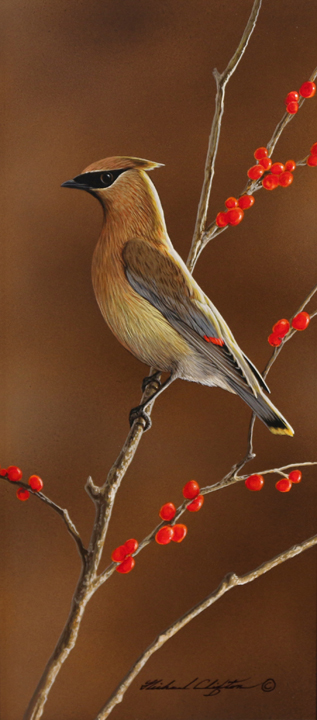 Vertical Waxwing by Richard Clifton