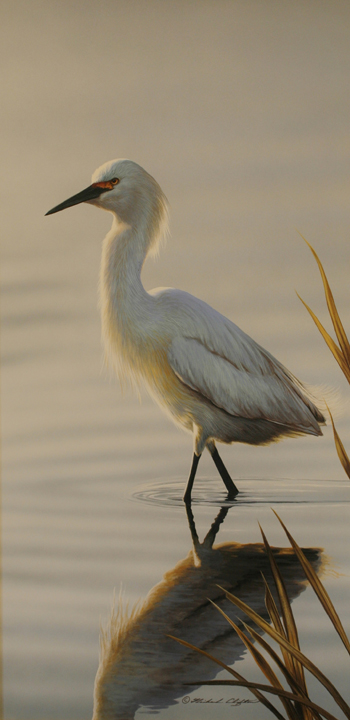 Wading – Egret by Richard Clifton
