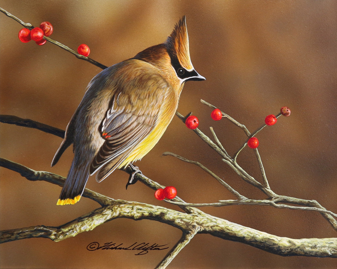Winterberry Waxwing by Richard Clifton