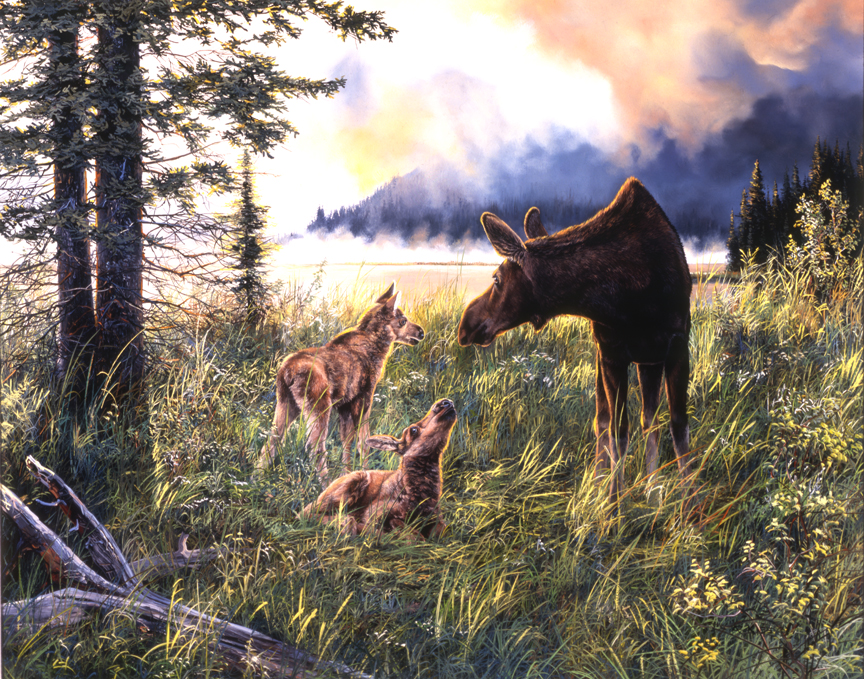 Moose Family by Andrew Kiss