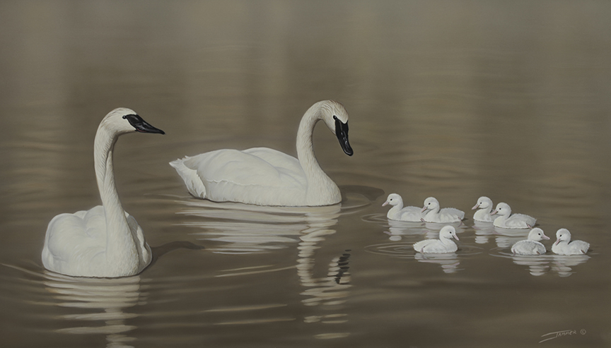 A Family Moment © Clinton Jammer