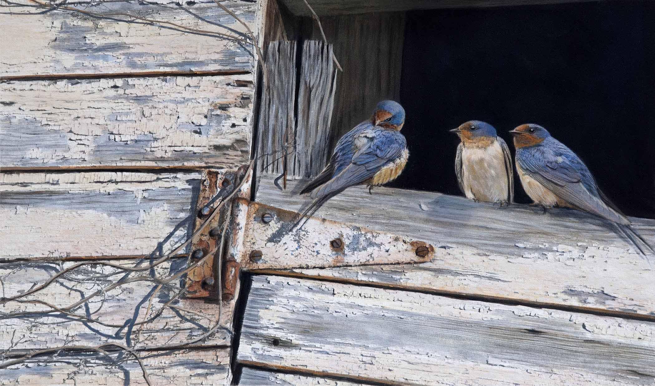 TD – Bluebirds © Tim Donovan