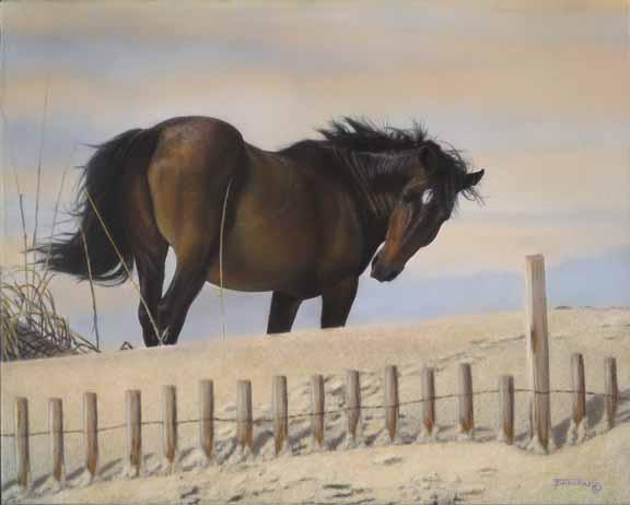 TD – Chincoteaque Stallion – Horse © Tim Donovan