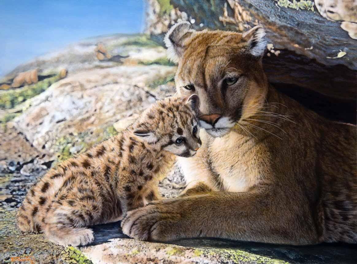 TD – Cougar and Kit © Tim Donovan