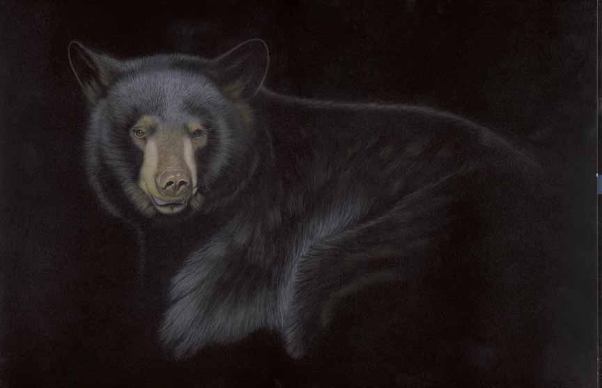 TD – Into the Light – Black Bear © Tim Donovan
