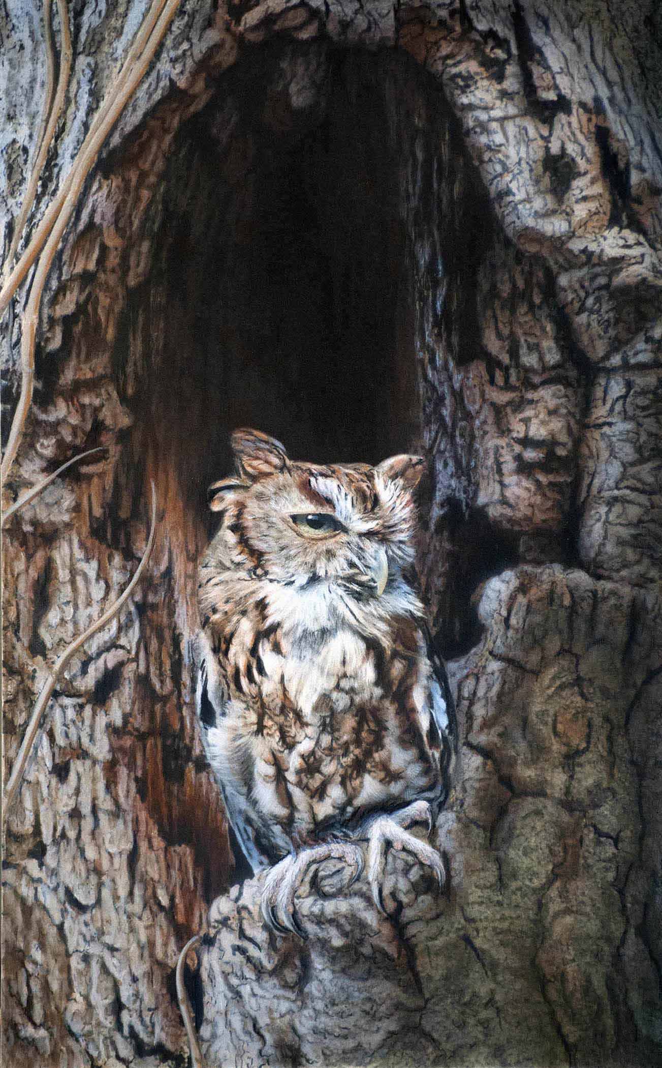TD – Owl © Tim Donovan