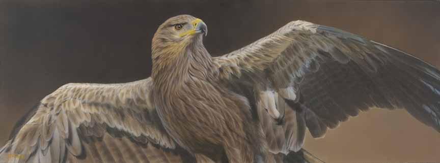 TD – Power – Golden Eagle © Tim Donovan