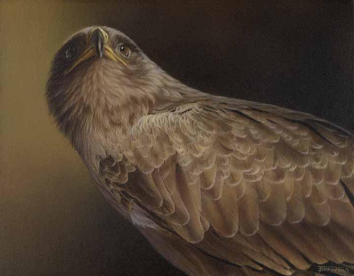 TD – Proud – Golden Eagle © Tim Donovan