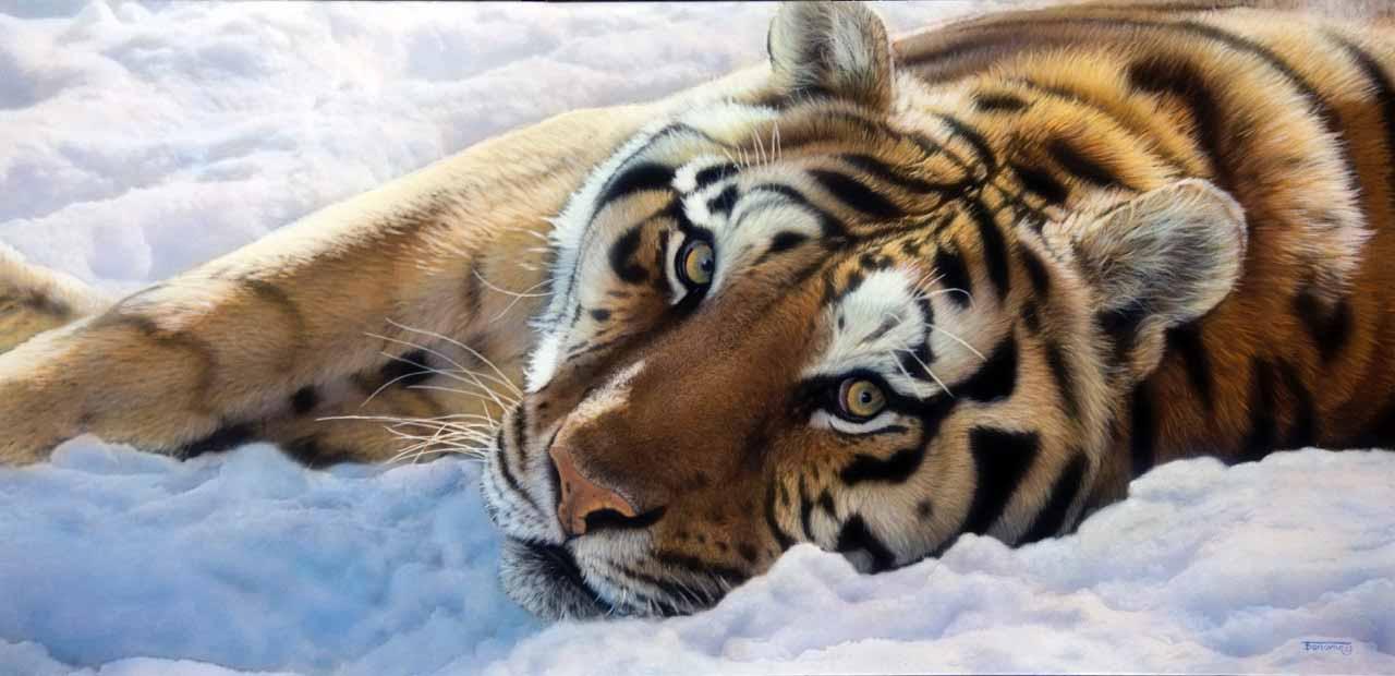TD – Tiger © Tim Donovan