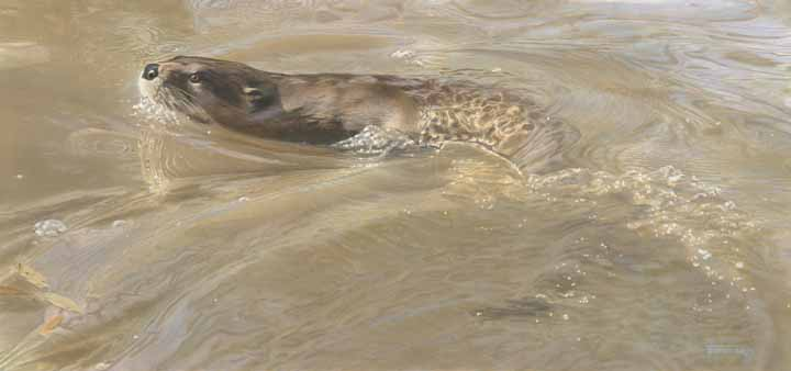 TD – Water Dance – Otter © Tim Donovan