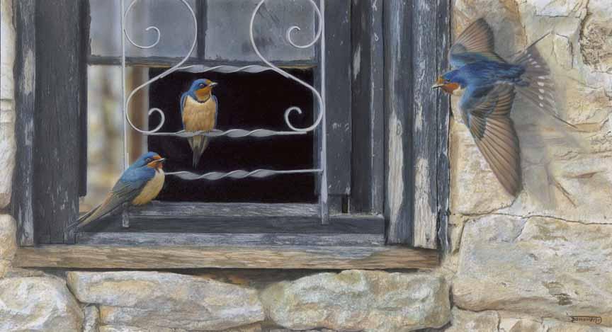 TD – Window Shoppers – Barn Swallows © Tim Donovan